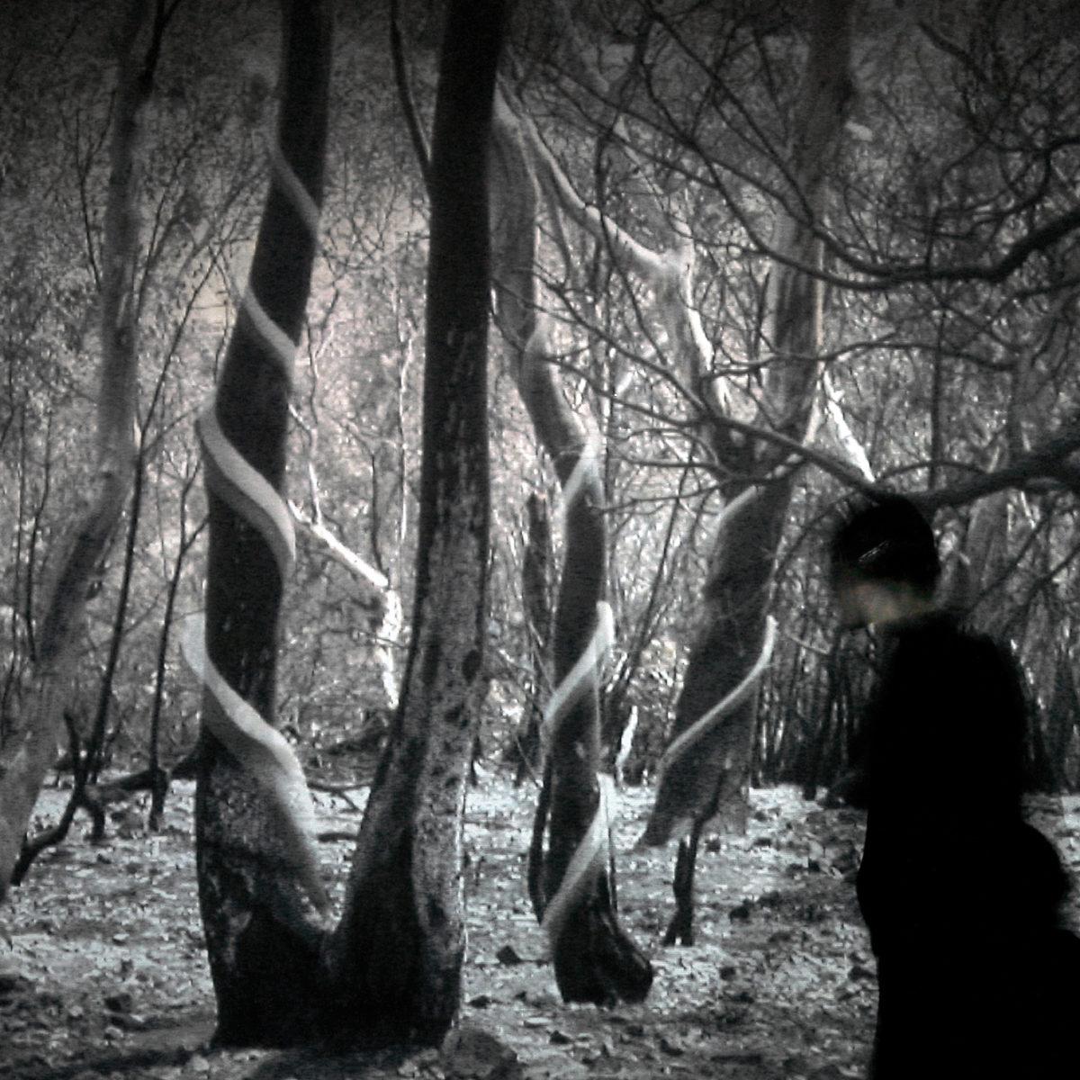 """""""Eidetic Bush"""", testo di Andrea Morucchio, 2003, ita"""